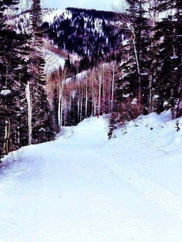Cat track at Steamboat
